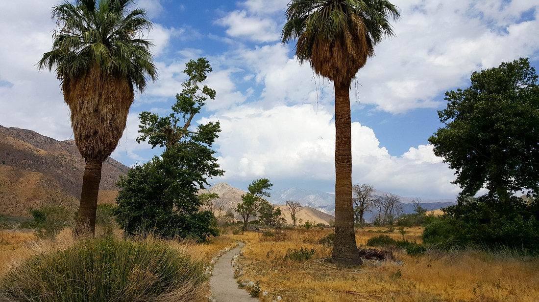 May 4 - WW reserve palm trees