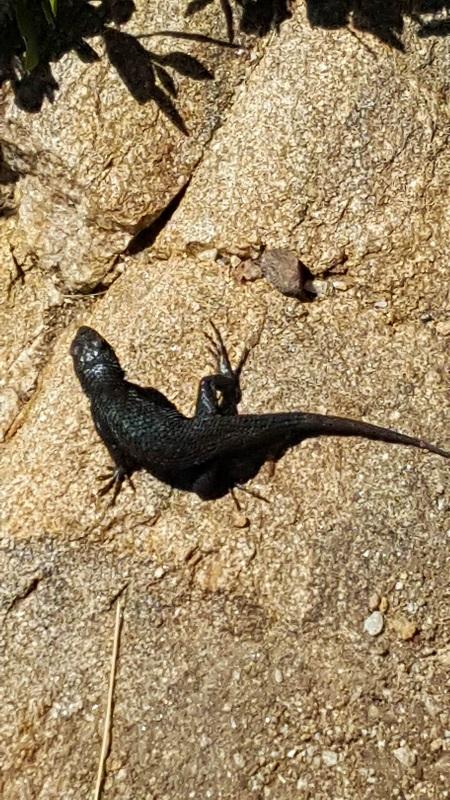 May 5 - lizard