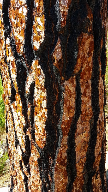 20150603_155732_Red bark tree
